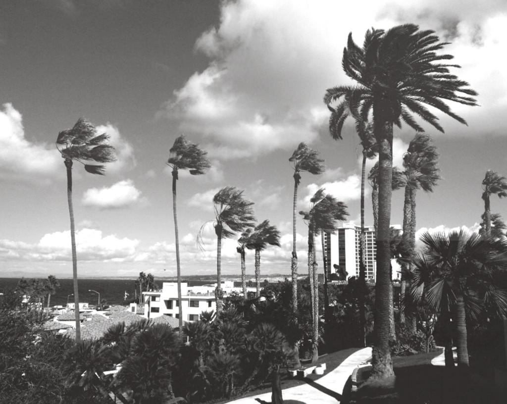 palm trees, black and white, southern california, santa ana winds, paradise, la jolla, photography