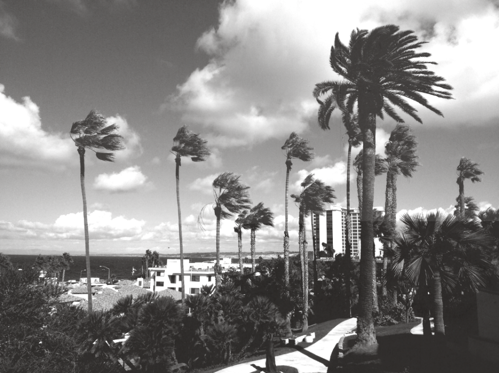 southern california, la jolla, san diego, palm trees, wind, black and white , landscape