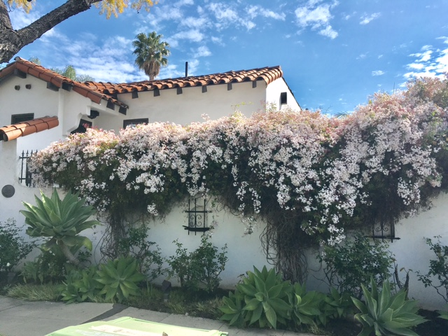 floral, flowers, residential, jasmine, spanish style, home, real estate, hygge